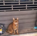 https://www.tp24.it/immagini_articoli/19-12-2018/1545201383-0-palermo-luomo-ucciso-strada-inseparabile-gatto-veglia-tutta-notte.jpg