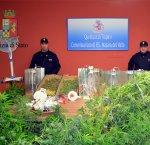 https://www.tp24.it/immagini_articoli/20-01-2018/1516457207-0-niente-arredi-mazara-uomo-dedica-stanza-casa-coltivazione-marijuana.jpg