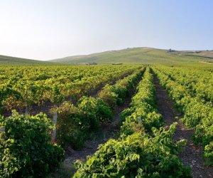 https://www.tp24.it/immagini_articoli/20-04-2017/1492667448-0-vino-cantine-europa-da-petrosino-alla-conquista-dell-etna.jpg