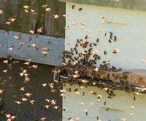 https://www.tp24.it/immagini_articoli/20-05-2014/1400565422-0-sciami-di-api-a-trapani-rizzi-convocare-la-conferenza-di-servizi.jpg