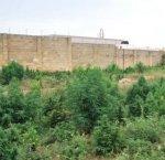 https://www.tp24.it/immagini_articoli/20-06-2018/1529485800-0-droga-trovate-piante-cannabis-vicino-chiesa-lorenzo-mazara.png