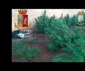 https://www.tp24.it/immagini_articoli/20-07-2021/1626771906-0-operazione-antidroga-a-mazara-scoperta-piantagione-di-marijuana.jpg