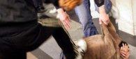 https://www.tp24.it/immagini_articoli/20-10-2018/1540038057-0-stato-operato-ragazzo-picchiato-sangue-lungomare-salinella-marsala.jpg
