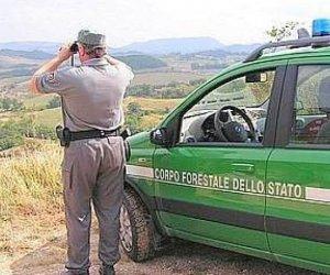 https://www.tp24.it/immagini_articoli/20-10-2019/1571564519-0-forestale-denuncia-rizzi-diffamazione.jpg