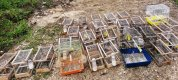 https://www.tp24.it/immagini_articoli/21-01-2021/1611222292-0-nascondevano-uccelli-di-specie-protetta-denunciati-padre-e-figlio-a-marsala-nbsp.jpg