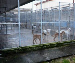 https://www.tp24.it/immagini_articoli/21-07-2021/1626865811-0-mazara-un-protocollo-d-intesa-per-incentivare-la-sterilizzazione-dei-cani-randagi.jpg