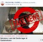 https://www.tp24.it/immagini_articoli/21-10-2018/1540138981-0-bufala-dellemergenza-sanitaria-canile-castelvetrano.jpg