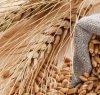 https://www.tp24.it/immagini_articoli/21-10-2021/1634819235-0-rincari-e-speculazione-internazionale-cosi-aumenta-il-prezzo-del-grano-e-pane-e-pasta-costano-di-piu.jpg