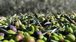 https://www.tp24.it/immagini_articoli/21-11-2020/1605978383-0-campagna-olearia-2020-in-sicilia-produzione-in-calo-ma-qualita-nbsp-migliore.jpg