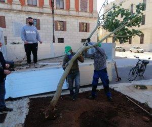 https://www.tp24.it/immagini_articoli/21-11-2020/1605983862-0-trapani-l-associazione-erythros-pianta-due-eritrine-in-piazza-vittorio-veneto.jpg