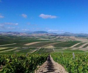 https://www.tp24.it/immagini_articoli/22-03-2019/1553264928-0-prezzi-crisi-nera-vino-tavola-siciliano.jpg