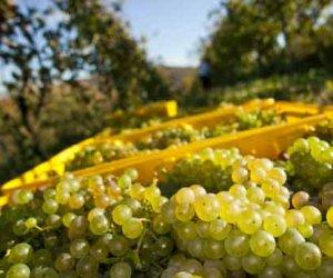 https://www.tp24.it/immagini_articoli/22-04-2016/1461314429-0-vitivinicoltura-la-cia-di-petrosino-lancia-un-nuovo-allarme-sui-prezzi-dei-vini-sfusi.jpg
