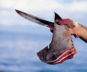 https://www.tp24.it/immagini_articoli/22-04-2017/1492851071-0-mazara-greenpeace-denuncia-il-peschereccio-eighteen-pinne-di-squalo-a-bordo.png