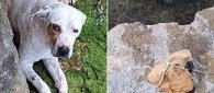 https://www.tp24.it/immagini_articoli/22-05-2019/1558535719-0-trapani-lega-nazionale-difesa-cani-chiede-riapertura-caso.jpg