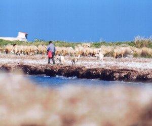 https://www.tp24.it/immagini_articoli/22-05-2020/1590157616-0-l-associazione-pro-capo-feto-cosa-fare-per-tutelare-l-oasi.png