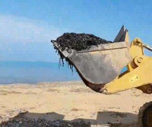 https://www.tp24.it/immagini_articoli/22-06-2018/1529644323-0-alghe-porto-selinunte-finiscono-riva-triscina-protesta-piazza.jpg
