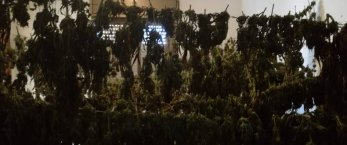 https://www.tp24.it/immagini_articoli/22-06-2018/1529656904-0-petrosino-sorpresi-deposito-marijuana-arrestati-giovani.jpg