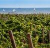 https://www.tp24.it/immagini_articoli/22-08-2018/1534945265-0-wine-tasting-favignana-firriato.jpg