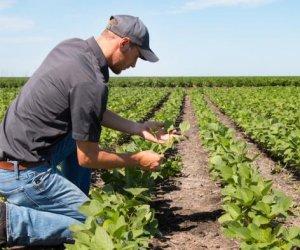 https://www.tp24.it/immagini_articoli/22-08-2019/1566496764-0-sicilia-finanziati-1625-progetti-giovani-agricoltori.jpg