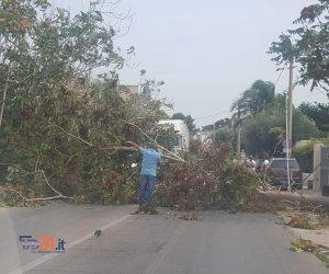 https://www.tp24.it/immagini_articoli/22-09-2019/1569150741-0-marsala-trapani-bloccata-albero-cade-strada-forte-vento-scirocco.jpg