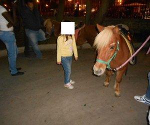 https://www.tp24.it/immagini_articoli/22-10-2013/1382428544-0-ponies-alla-villa-di-trapani-per-far-diverire-i-bambini-contrario-enrico-rizzi.jpg