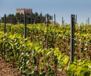 https://www.tp24.it/immagini_articoli/23-01-2017/1485189835-0-crisi-viticoltura-venerdi-27-gennaio-a-petrosino-l-assemblea-organizzata-dalla-cia.jpg