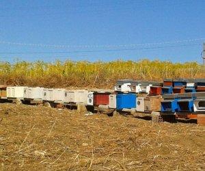 https://www.tp24.it/immagini_articoli/23-02-2015/1424684081-0-furti-nelle-campagne-adesso-nel-trapanese-rubano-anche-gli-alveari-e-le-api.jpg