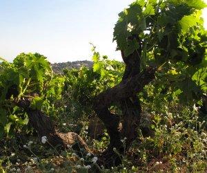 https://www.tp24.it/immagini_articoli/23-03-2015/1427120434-0-vino-sicilia-prima-per-superficie-vitata-ultima-per-le-esportazioni.jpg