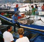 https://www.tp24.it/immagini_articoli/23-06-2018/1529746411-0-pesca-musumeci-presenta-disegno-legge-dovra-regolamentare-tutto-comparto.jpg