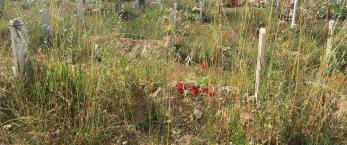 https://www.tp24.it/immagini_articoli/23-06-2018/1529753701-0-cimitero-trapani-neanche-morti-riposano-pace.jpg