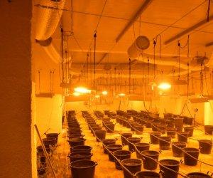 https://www.tp24.it/immagini_articoli/23-07-2021/1627037149-0-enorme-e-tecnologica-serra-di-marijuana-scoperta-a-salemi-denunciato-un-marsalese.jpg