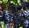 https://www.tp24.it/immagini_articoli/23-07-2021/1627072870-0-enoteca-della-sicilia-occidentale-scilla-laquo-in-rete-agroalimentare-e-turismo-raquo.jpg