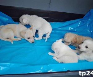 https://www.tp24.it/immagini_articoli/23-09-2018/1537690901-0-trapani-soccorsi-cinque-cuccioli-abbandonati-dentro-scatolone.jpg