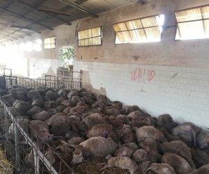 https://www.tp24.it/immagini_articoli/23-09-2019/1569248207-0-strage-pecore-marsala-proprietario-gregge-ecco-andata.jpg