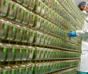 https://www.tp24.it/immagini_articoli/23-11-2020/1606131608-0-vaccino-astrazeneca-efficacia-al-90-inoculazione-di-mezza-dose-e-richiamo-con-una-dose-completa-dopo-un-mese.jpg