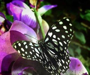 https://www.tp24.it/immagini_articoli/24-01-2020/1579902886-0-marsala-febbraio-complesso-pietro-apre-casa-farfalle.png