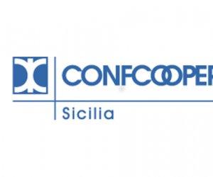 https://www.tp24.it/immagini_articoli/24-03-2020/1585071485-0-confcooperative-sicilia-rinnova-cariche-provincia-trapani.jpg