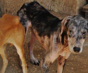 https://www.tp24.it/immagini_articoli/24-08-2015/1440367805-0-castelvetrano-cani-randagi-e-maltrattamento-di-massa-ecco-tutte-le-foto.jpg