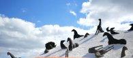 https://www.tp24.it/immagini_articoli/24-09-2021/1632477235-0-in-viaggio-tra-i-filari-nella-rete-museale-e-naturale-belicina.jpg