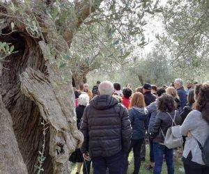 https://www.tp24.it/immagini_articoli/24-10-2018/1540416273-0-paesaggio-impegno-olivicoltori-sicilia-camminata-olivi-2018.jpg