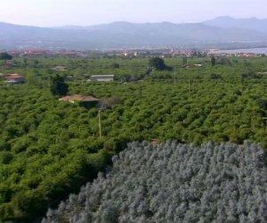 https://www.tp24.it/immagini_articoli/24-12-2015/1450937308-0-coldiretti-per-l-agricoltura-siciliana-il-2015-e-stato-un-ottimo-anno.jpg