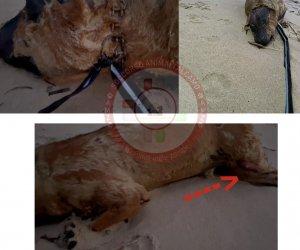 https://www.tp24.it/immagini_articoli/25-01-2021/1611602106-0-tra-balestrate-e-alcamo-un-cane-morto-con-segni-di-ustioni-trovato-in-spiaggia.jpg