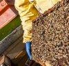 https://www.tp24.it/immagini_articoli/25-02-2020/1582587641-0-apicoltura-crisi-sicilia-2019-registrata-perdita-quasi-7milioni-euro.jpg