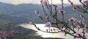 https://www.tp24.it/immagini_articoli/25-03-2020/1585095527-0-casa-natura-ripresa-suoi-spazi.jpg