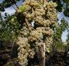 https://www.tp24.it/immagini_articoli/25-03-2021/1616705149-0-sicilia-pubblicata-nbsp-la-graduatoria-ocm-vino.jpg
