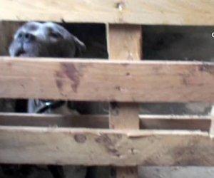 https://www.tp24.it/immagini_articoli/25-05-2015/1432531970-0-combattimenti-di-cani-a-trapani-istituzioni-indifferenti.jpg