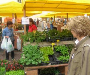 https://www.tp24.it/immagini_articoli/25-07-2015/1437804367-0-petrosino-oggi-in-piazza-biscione-il-primo-mercato-del-contadino.jpg
