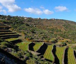 https://www.tp24.it/immagini_articoli/25-08-2018/1535181231-0-tutto-pronto-pantelleria-festival.jpg