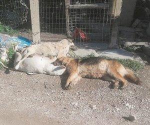 https://www.tp24.it/immagini_articoli/25-08-2019/1566726171-0-cani-gatti-uccisi-triste-primato-sicilia.jpg