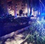 https://www.tp24.it/immagini_articoli/25-09-2018/1537906556-0-trapani-ramo-cade-strada-incidente-sfiorato-disagi.jpg